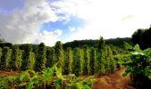 Экскурсия на Фукуок